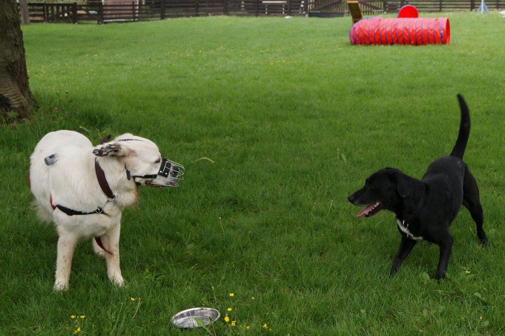 Kennenlernen hunde untereinander
